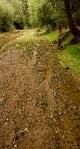 Tracks on the Agua Fria River Banks