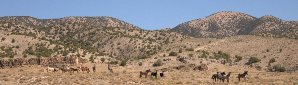 Wild Horses on weed range.