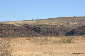Invasive plants on Black Mesa.