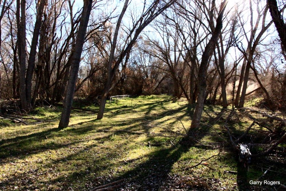 Ripgut Brome pasture