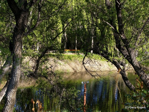 One of the ponds on Coldwater Farm