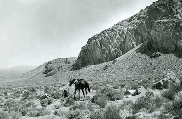 1901 (Gilbert). Shrubland in the Great Basin Desert.