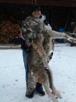 shot-wolf