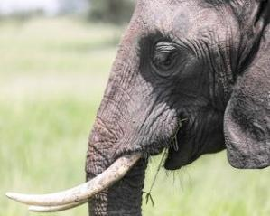 India elephant-ap