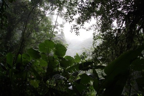 Cloud_Forest_at_Monteverde