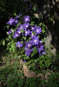 01-Flowers-1020177