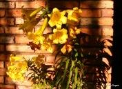 04-20050701-0507_Dewey AZ_1903