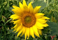 07-20080629-0806_Flowers and pollinators_013