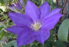 12-20080511-0805_Pinyon-Oak Alliace_038