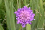 14-Flowers at Coldwater Farm-0023