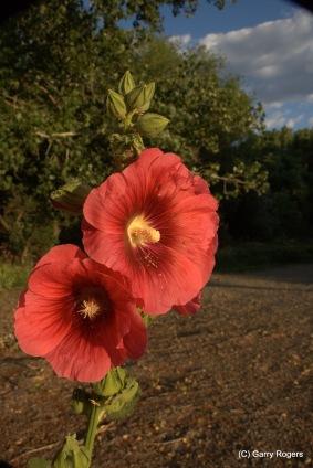 19-20080628-0806_Flowers and pollinators_016