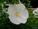 26-20040806-0408_Dewey AZ_402