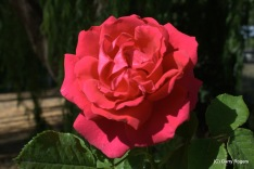 27-20080626-0806_Flowers and pollinators_025