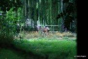 The 2013 Mule Deer Fawn's m