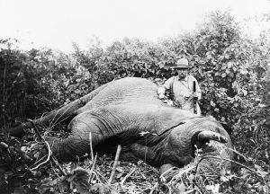 Teddy Roosevelt with dead elephant