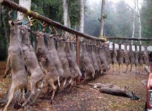hunting--deer
