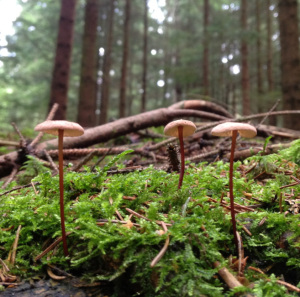 forest fungi