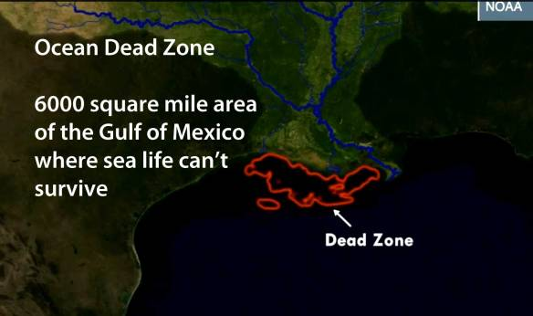 ocean-dead-zone-in-gom-2013-august