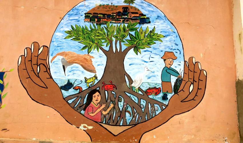 mass mangrove restoration  driven by good intentions but