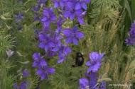 Pollinators-0062