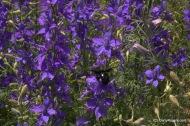 Pollinators-0072