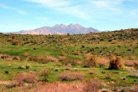 Saguaro Fire Site - Copyright 2018 - Garry Rogers