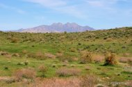 Saguaro fire site - GR